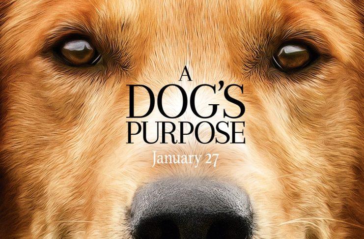 """A dog's purpose"""